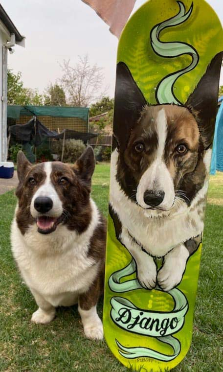 Custom painted skate board portrait of Django the Corgi
